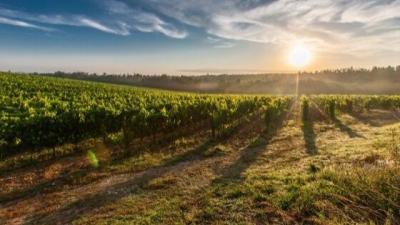 Hoe wordt wijn gebrouwen?