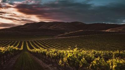 Wat is het verschil tussen Duitse en Franse wijn?